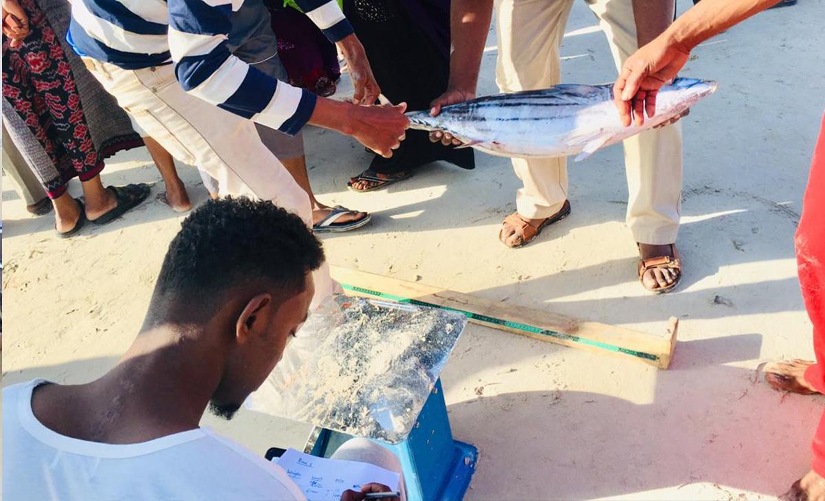 collecting fish data Somalia