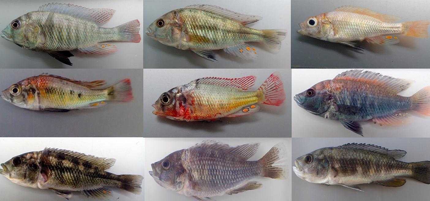 Biodiversity in Lake Victoria