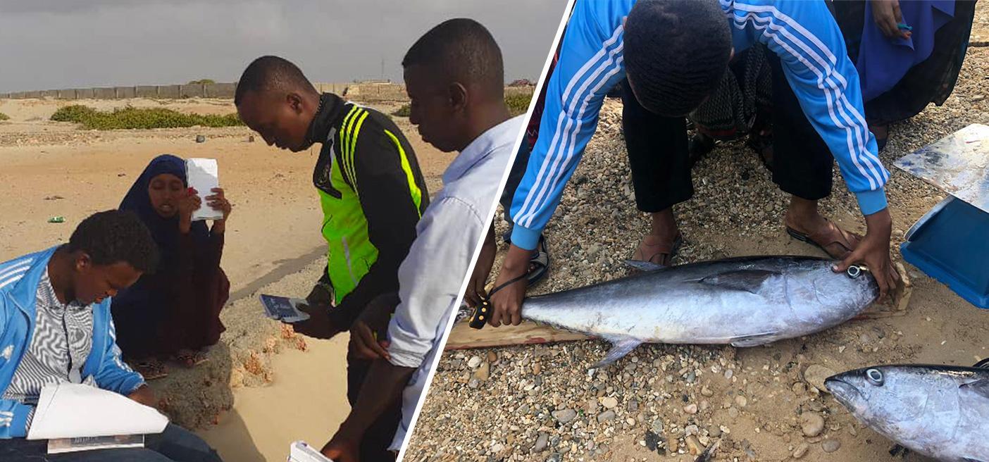 fish data collection Somalia growing