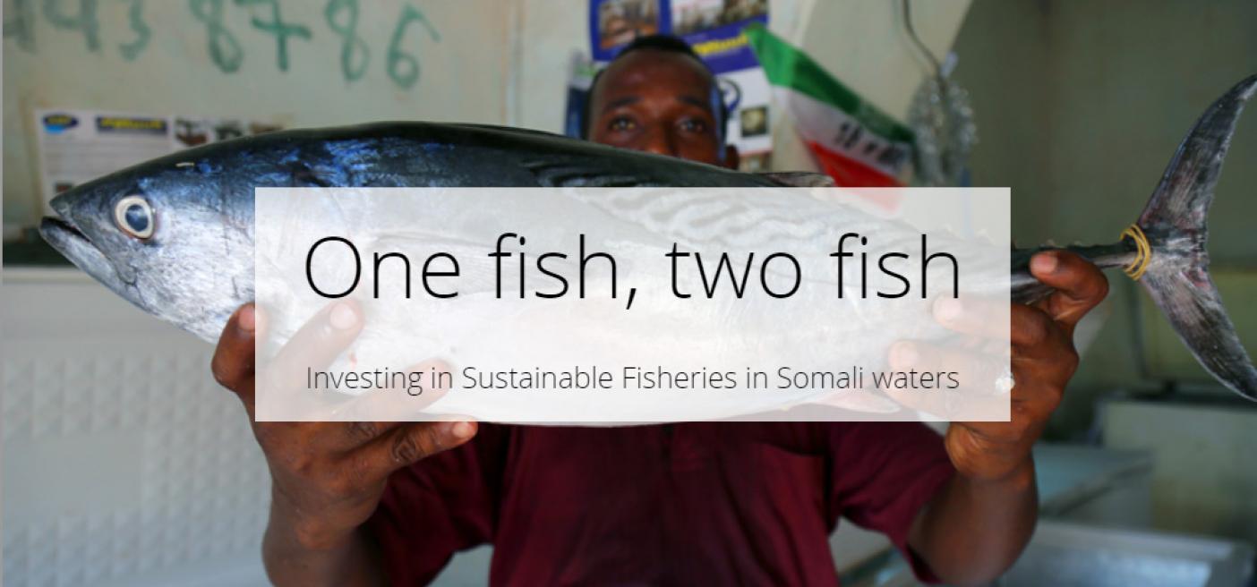 investing sustainable fisheries in somalia tuna