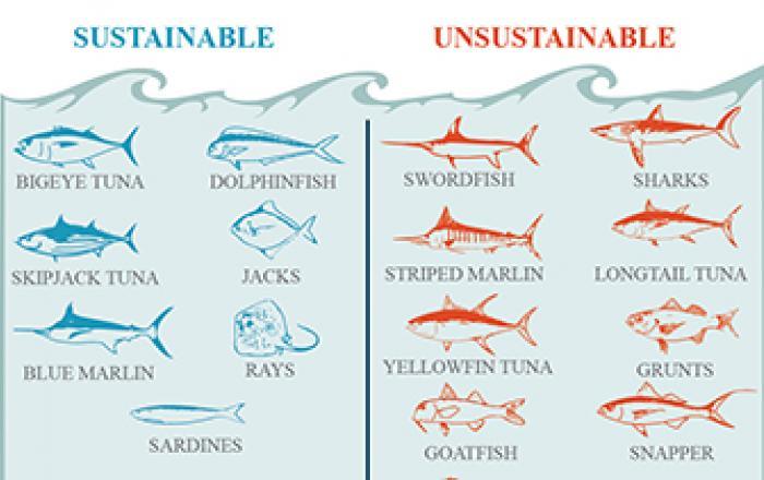 sustainability fishing Somali waters