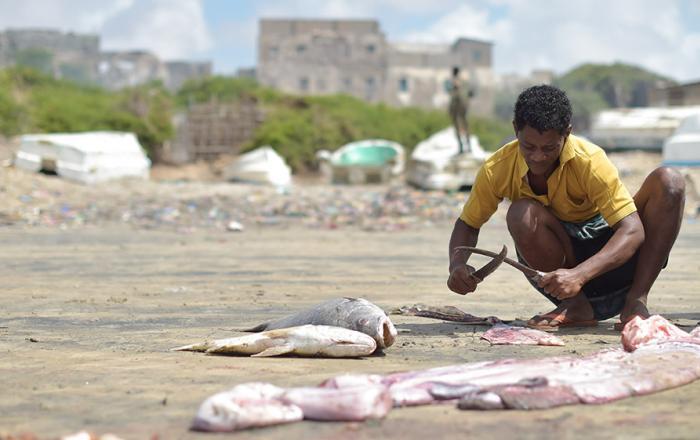 Fisherman and Sustainable Fish