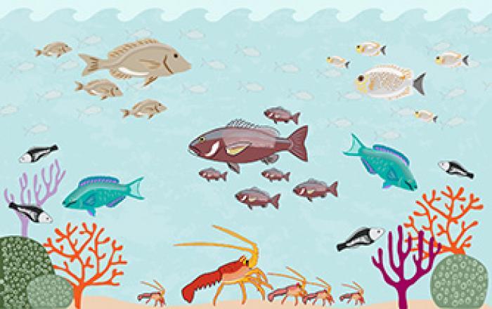 illustrated sustainable fisheries somalia