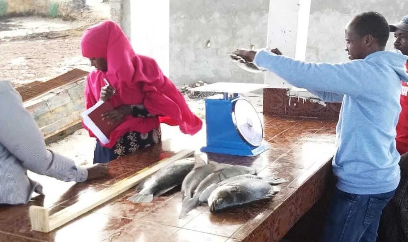 fisheries data collection somali