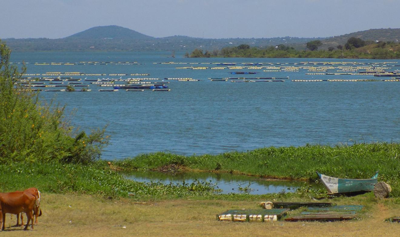 Aquaculture in Lake Victoria