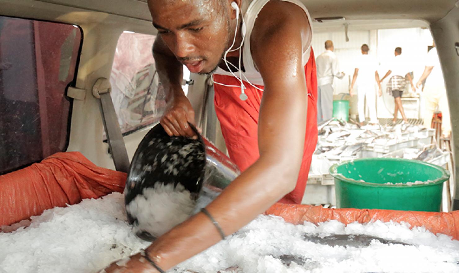 Somali fisheries cold chain